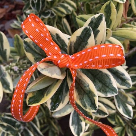 Orange & White Saddle Stitch Grosgrain Ribbon