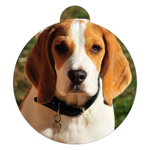 American Foxhound Picture ID tag