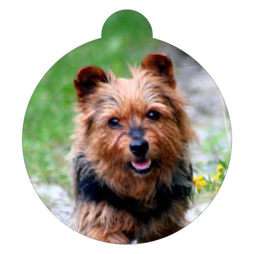 Australian Terrier Picture ID tag