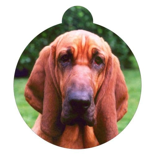 Bloodhound Picture ID tag